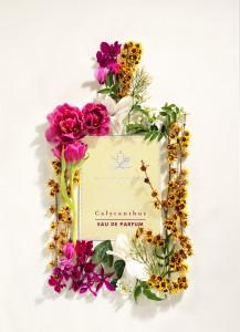 eau-de parfum-calycanthus-acca-kappa