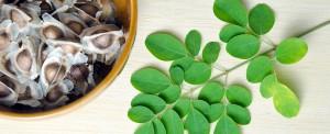 semi-di-moringa-oleifera